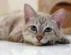 Dogs, Cats, Pets Home made Food Recipes</strong></font><br>